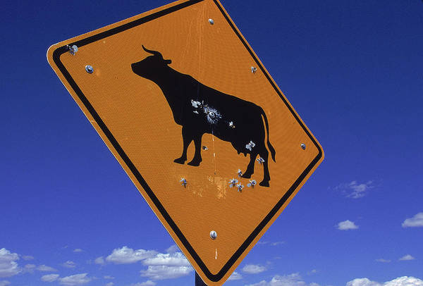 Angle Drawing - A Road Sign Consisting Of An Animal by Peter Essick