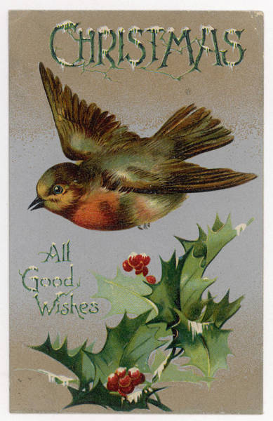 Wall Art - Drawing - A Robin And Some Holly          Date by Mary Evans Picture Library