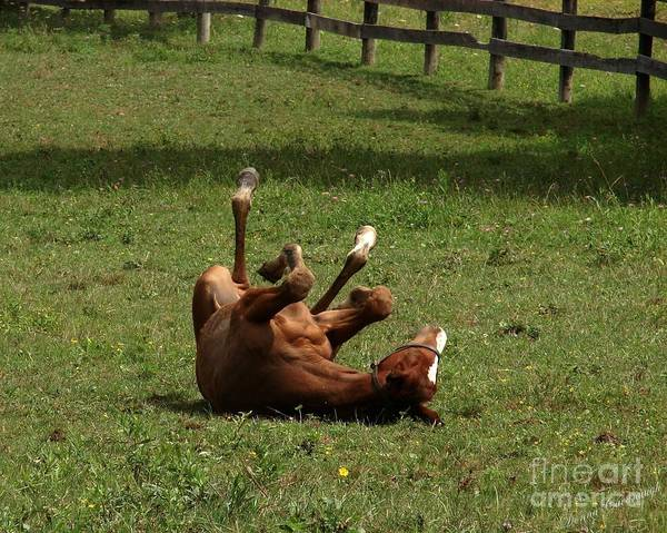 Photograph - A Roll In The Hay Is For Horses by Donna Cavanaugh