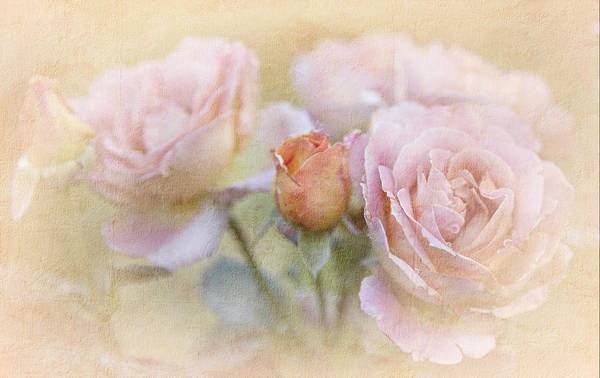 Peach Flower Wall Art - Photograph - A Rose By Any Other Name by Theresa Tahara