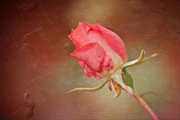 Mixed Media - A Rose In The Rain by Trish Tritz