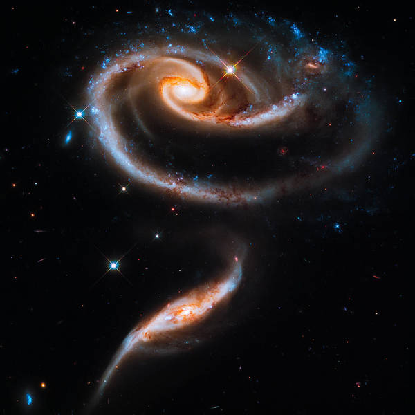 Infrared Radiation Photograph - A Rose Made Of Galaxies by Marco Oliveira