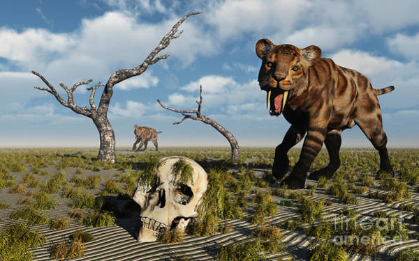 Smilodon Wall Art - Digital Art - A Sabre Tooth Tiger Discovers by Mark Stevenson