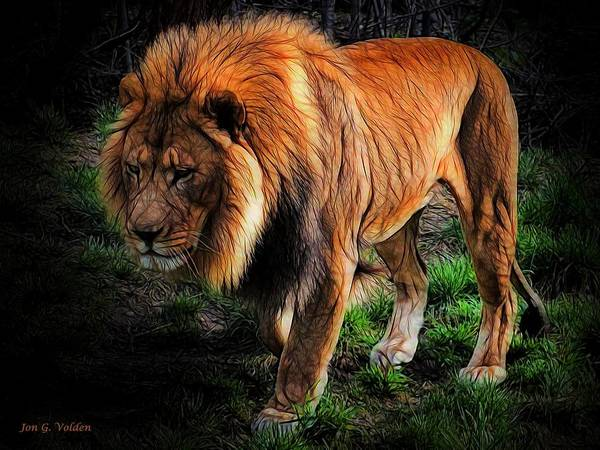 Painting - A Sad Lion by Jon Volden