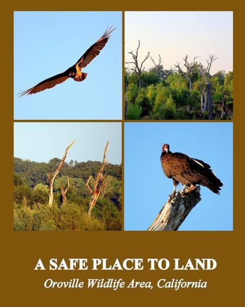 Photograph - A Safe Place To Land by AJ  Schibig
