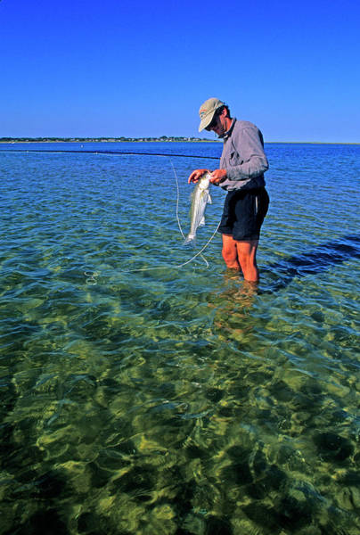 Fly Fishermen Photograph - A Salt Water Fly Fisherman Catches by Stephen Gorman
