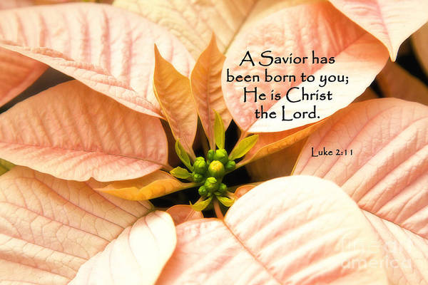 Photograph - A Savior Has Been Born To You He Is Christ The Lord by Jill Lang