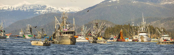 Wall Art - Photograph - A Scrum For Herring by Tim Grams