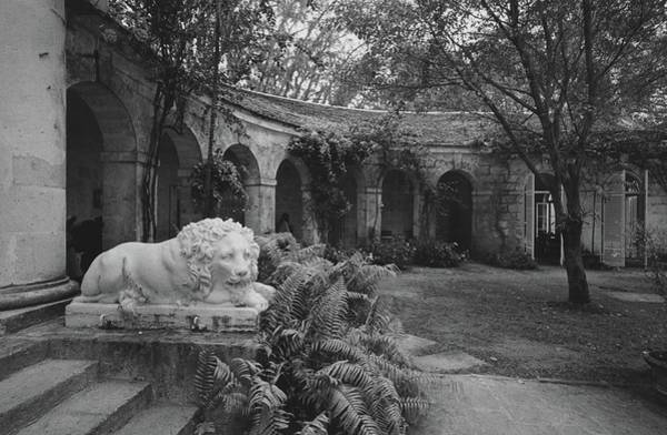 Architecture Photograph - A Sculpture Of A Lion In A Garden by Patrick Litchfield