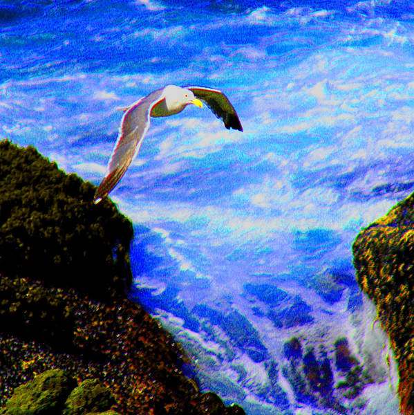 Digital Art - A Seagull Above The Waves by Joseph Coulombe