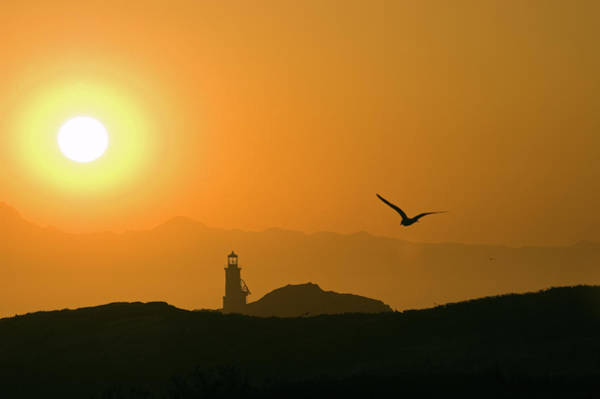 Wall Art - Photograph - A Segull And The Sun Setting by Rich Reid