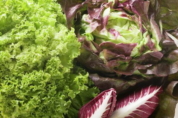 Vegies Photograph - A Selection Of Lettuces And Radicchio (detail) by Foodcollection