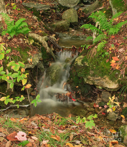 Photograph - A Simple Fall by Charles Kozierok