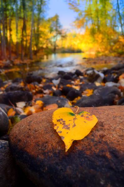Photograph - A Single Leaf Amongst Many by Tara Turner