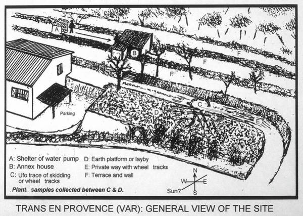 Land Mark Drawing - A Sketch Of Renato Niccolai's Garden by Mary Evans Picture Library