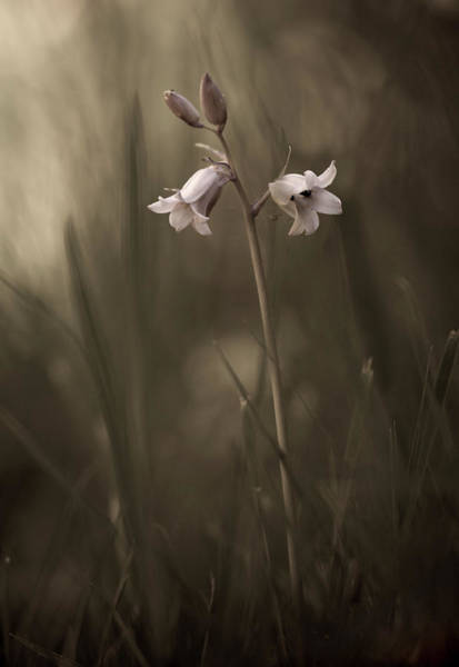 Grass Photograph - A Small Flower On The Ground by Allan Wallberg