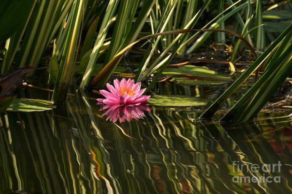Photograph - A Small Summer Treat by Byron Varvarigos