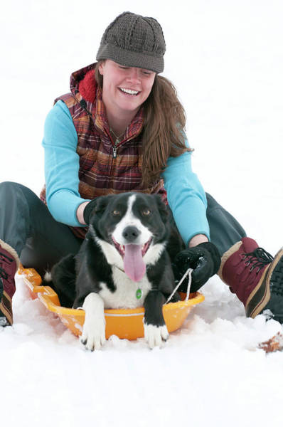 Wall Art - Photograph - A Smiling Young Woman Rides A Sled by Jeff Diener