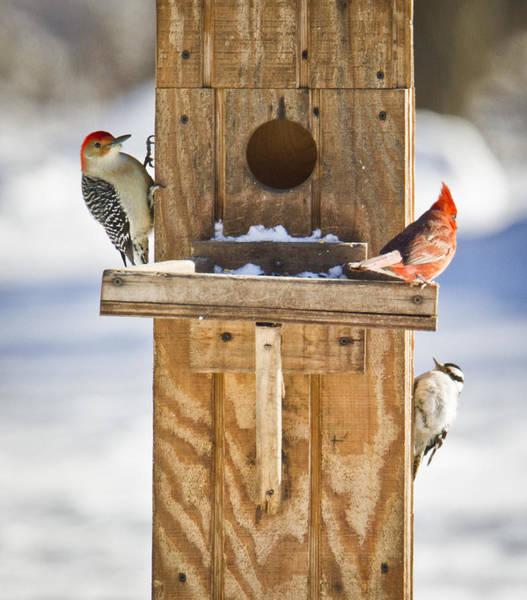 Photograph - A Smorgasbord Of Backyard Birds by Ricky L Jones