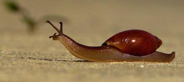 Photograph - A Snails Pace by Tyson Kinnison