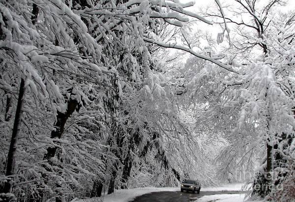 Photograph - A Snowy Drive Through Chestnut Ridge Park by Rose Santuci-Sofranko