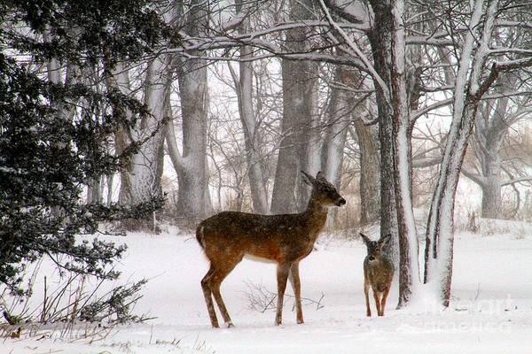 Wall Art - Photograph - A Snowy Path by Elizabeth Winter