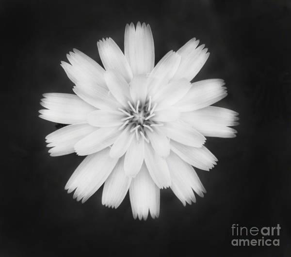 Photograph - A Soft Flower by Donna Greene
