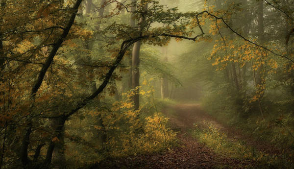 Woods Photograph - A Sorrow Beyond Dreams / Color by Norbert Maier