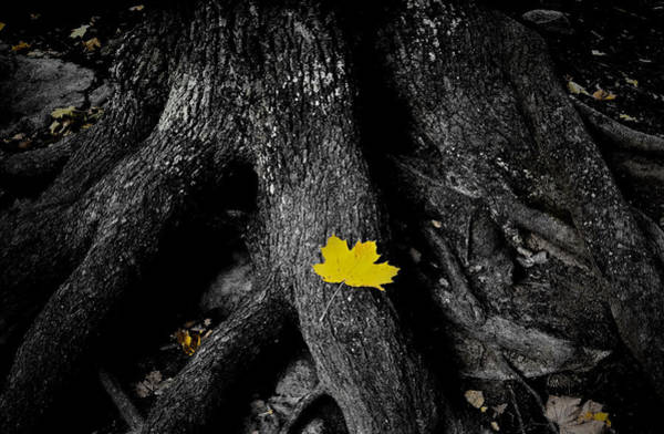 Oak Photograph - A Spark Of Color by Nicklas Gustafsson