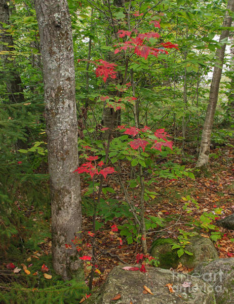 Photograph - A Spash Of Red by Charles Kozierok