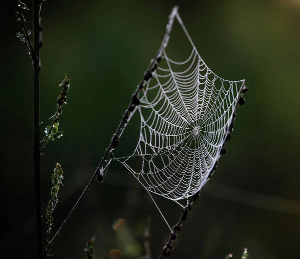 Wall Art - Photograph - A Spider Web Is Seen Along A Trail by Jeffrey Phelps