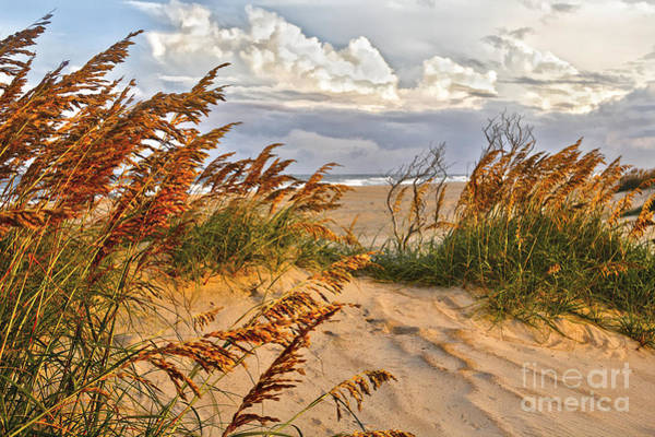 Outer Banks Painting - A Splendid Day At The Beach - Outer Banks by Dan Carmichael