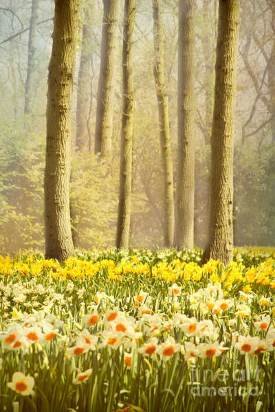 Wall Art - Photograph - A Spring Day by Jasna Buncic