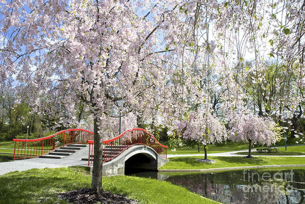 Harrisburg Pa Photograph - A Spring Walk by Paul W Faust -  Impressions of Light