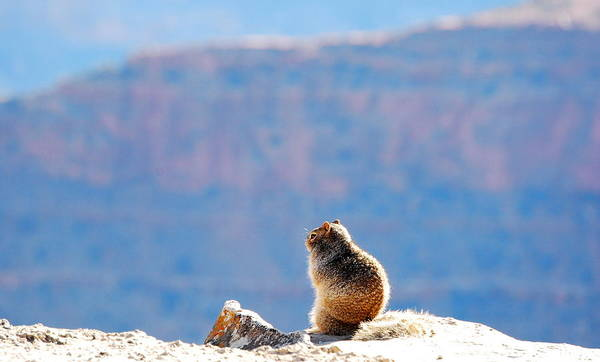 Brillante Photograph - A Squirol On The Cliff by HQ Photo