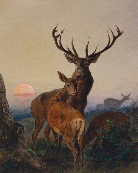Wall Art - Painting - A Stag With Deer In A Wooded Landscape At Sunset by Charles Jones
