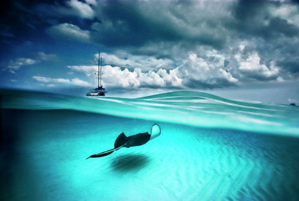 Wall Art - Photograph - A Stingray And Sailboat In North Sound by David Doubilet