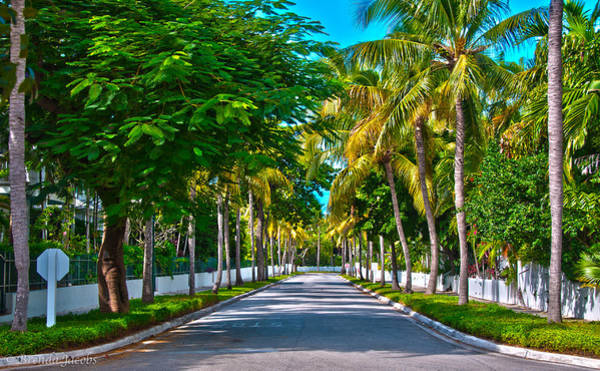 Photograph - A Street Of Palms by Brenda Jacobs