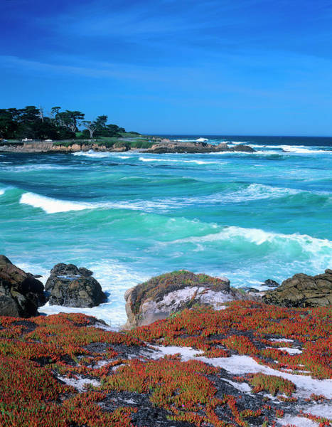 Monterey Cypress Photograph - A Stretch Of Beach Along The Famed by John Alves