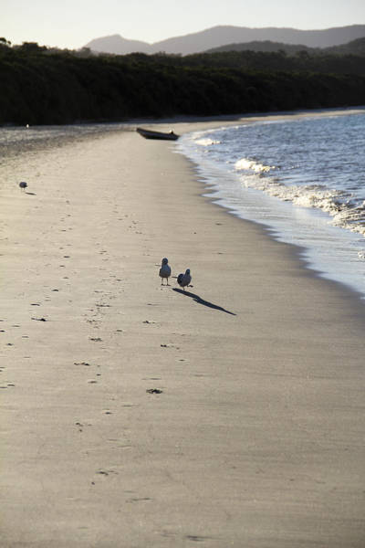 Art Print featuring the photograph A Stroll Along The Beach by Debbie Cundy
