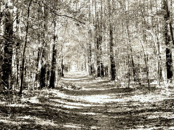 Photograph - A Stroll In The Park Black And White by Lisa Wooten