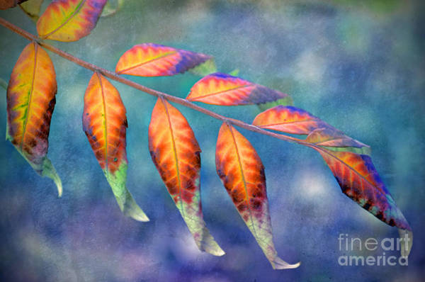 Photograph - A Study Of Leaves by Tara Turner