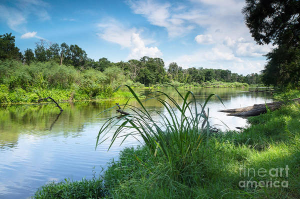 Wall Art - Photograph - A Summer Day Of Stubblefield Waterplants by Ellie Teramoto