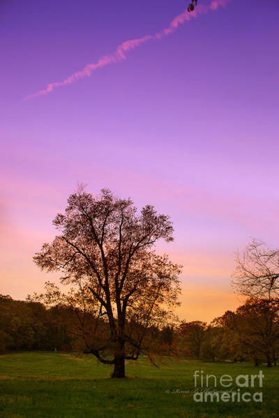 Photograph - A Sunset In Spring by Rima Biswas
