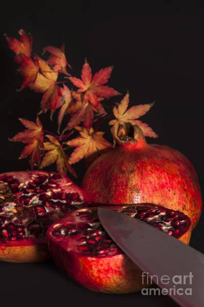 Burnt Orange Photograph - A Taste Of Autumn by Nigel Jones
