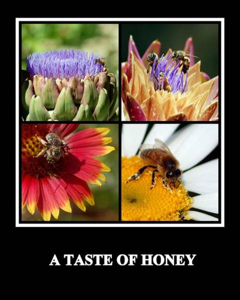 Photograph - A Taste Of Honey by AJ  Schibig