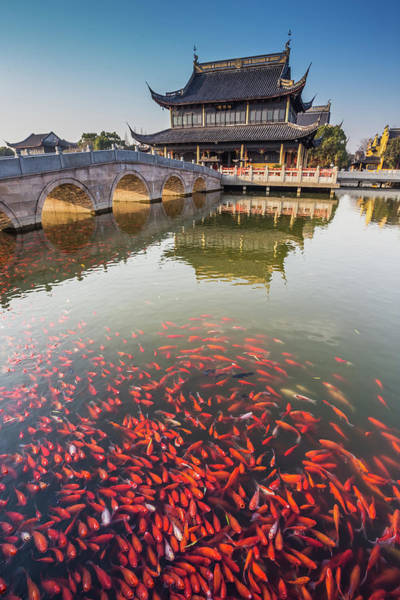 Carp Photograph - A Temple In Jiangsu Province Of China by Linghe Zhao