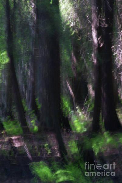 Photograph - A Thin Veil by Linda Shafer