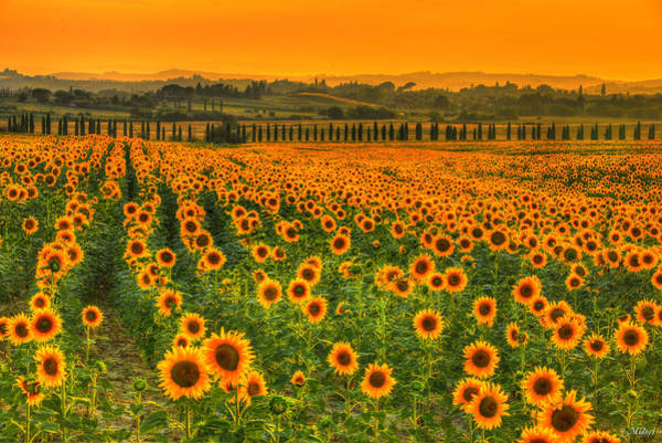 Wall Art - Photograph - A Thousand Sun by Midori Chan