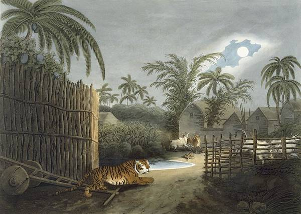 Tropical Drawing - A Tiger Prowling Through A Village by Samuel Howett